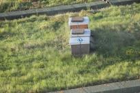 eigene Honig Produktion auf dem Dach des Hotels